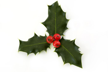 sprig of holly with berries over white