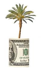 palm tree  growing from dollar bill
