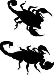 scorpions silhouette vector