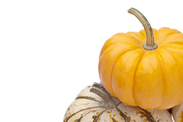 Festive Pumpkin Border