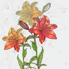 hand-drawing blooming lilies