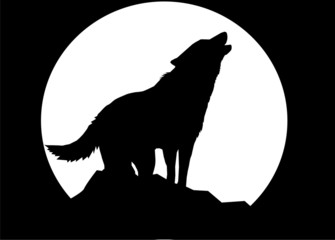wolf (black background)