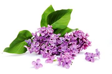 Foto op Aluminium Lilac Lilac