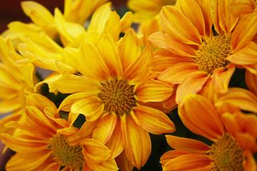fiori macro