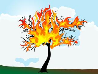Fototapete - Burning tree