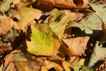 Herbstlaub III