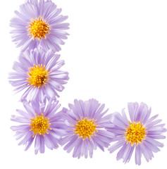 small purple chrysanthemums