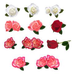 Set of a beautiful roses. Vector.