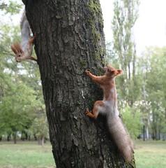 Tuinposter Eekhoorn белки
