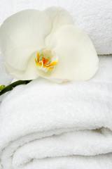orchidea bianca su telo bagno
