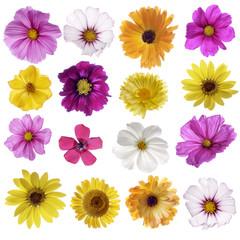 Herbstblumen - bunte Mischung