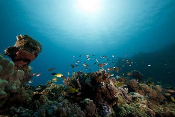 fish and ocean