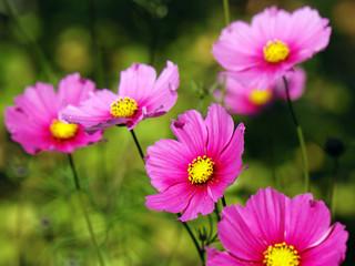 Farbenfrohe Blüten