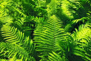 Growth fern