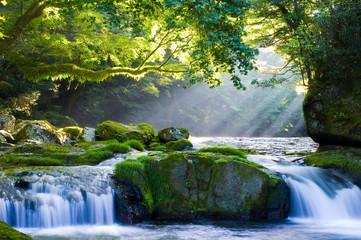 Fototapeta 原生林と渓流と光芒 Virgin forest and shaft beam of light obraz