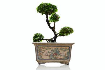 banyan in pot antique