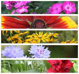 Bandeaux - Fleurs