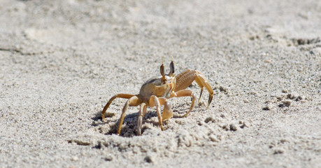 closeup of a crab on a beach sand