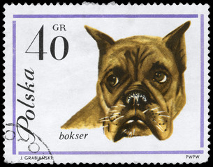 POLAND - CIRCA 1963 Boxer