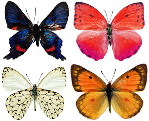 collection of butterflies isolated on white
