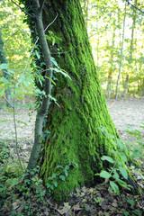 zona sile quercia alberi 1264