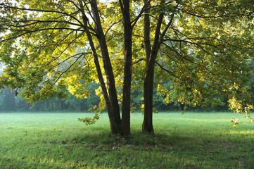 zona sile paesaggio alberi 1279