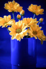 Contrast. Small yellow flowers in blue vase