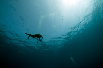 diver photographer and ocean