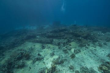 wreckage of the yolanda and fish
