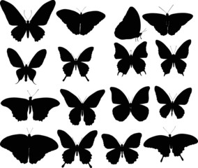 sixteen black butterfly silhouettes