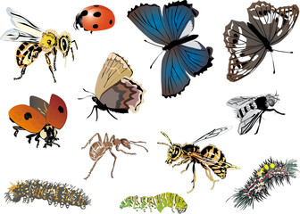 twelve color insects collection