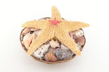 Starfish on seashells