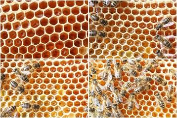 abeilles, alvéoles et miel
