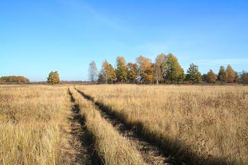 rural road on autumn field