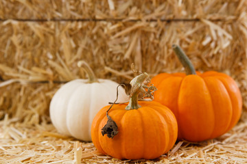 Three small pumpkins against straw with shallow depth of field