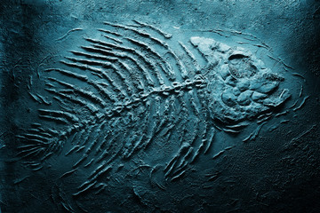Closeup of big fish skeleton fossils on bottom of sea