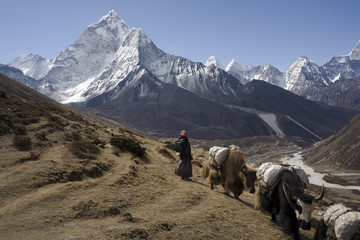 Nepalese landscape, Yaks against top Amadablan