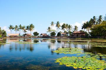 Lotus lagoon in Bali