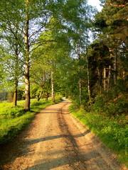 Blühende Naturlandschaft