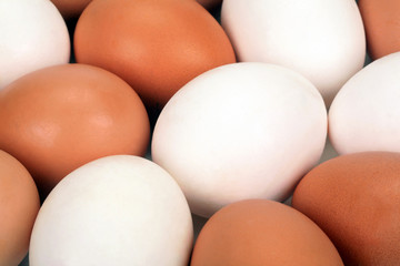 Abstract background from eggs