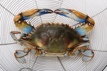 Maryland Blue Crab.