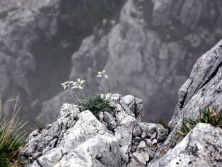 Stelle alpine sulla strada degli eroi