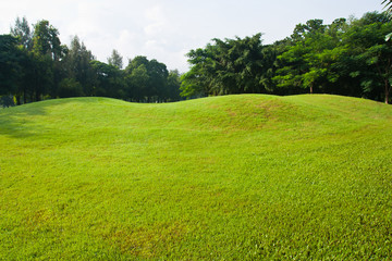 Green grass, field background