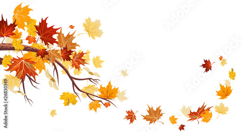 Christmas Tree Flower Power : Quot maple leaves stock image and royalty free vector files