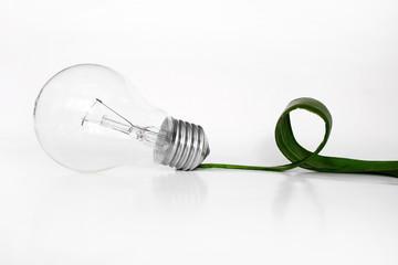 Ligh bulb and  green leaf
