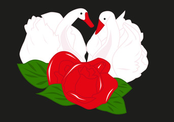 Swans and rose
