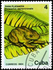 CUBA - CIRCA 1984 Frog