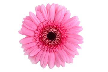 Fotobehang Gerbera Perfect Pink Gerbera