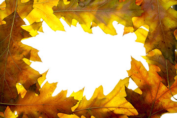 Simple frame from oak autumn leaves