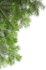 pine border isolated